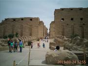 埃及归来图片