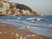 充满活力与魅力的釜山图片