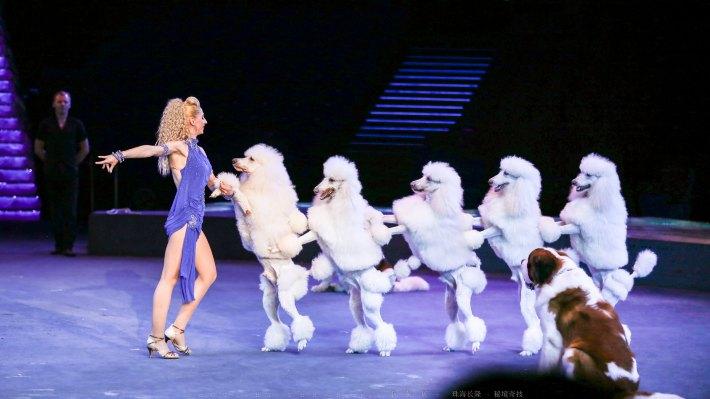 一场盛大的动物嘉年华,狗狗们精彩的表演博得观众雷鸣般的掌声,也让
