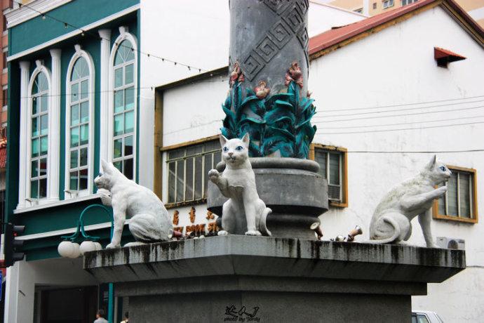 猫游古晋图片