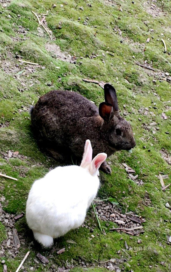 亲近自然与动物为伴的生态园