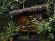 马来西亚  猫山王多到让你吃吐!90%旅行者都不知道的度假村!图片
