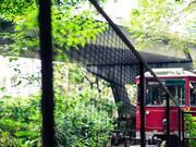 【慢游香港】走一座城,完一个光怪陆离的梦图片