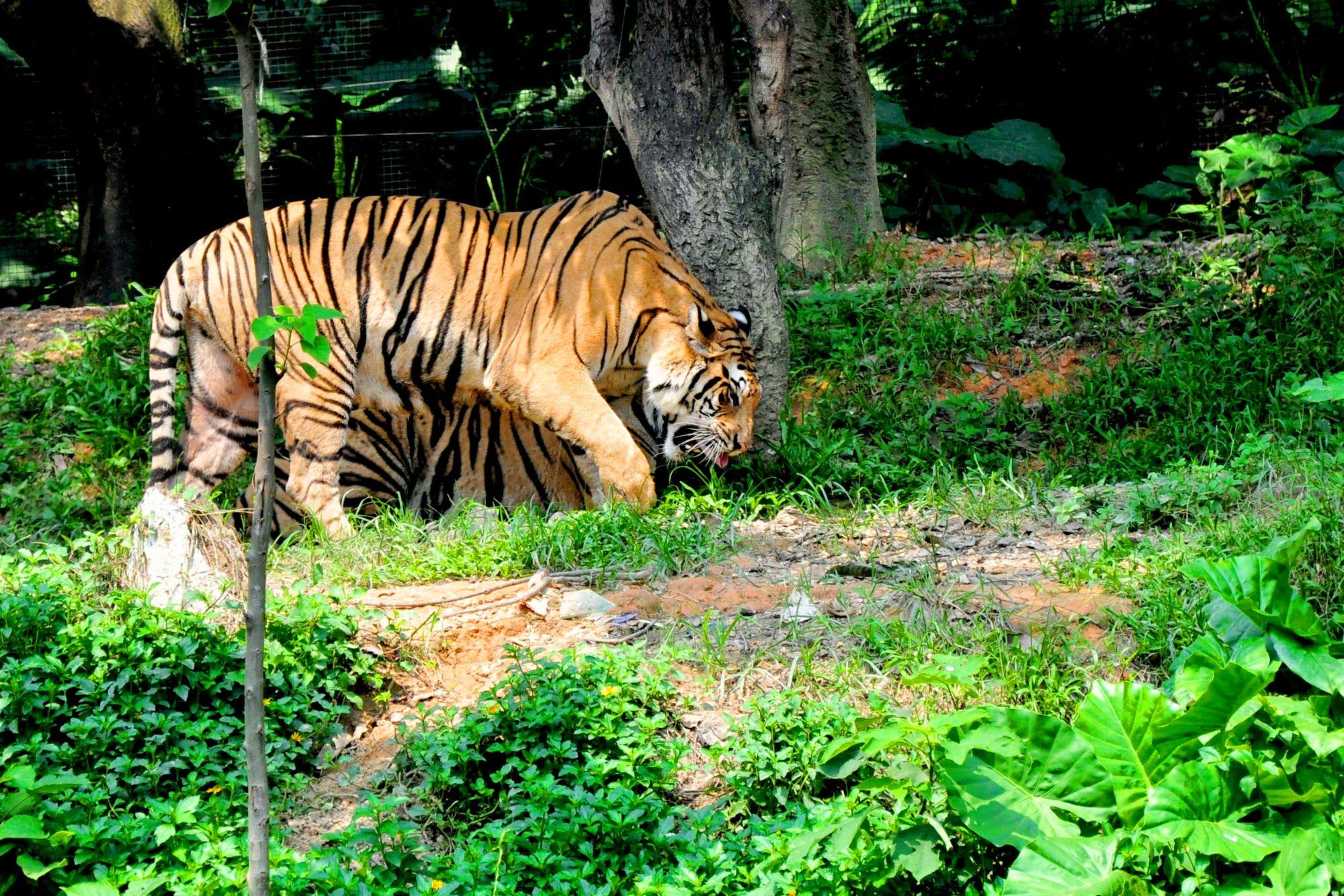 岭南印象园 岭南文化街 双月湾 长隆野生动物园5日跟团游
