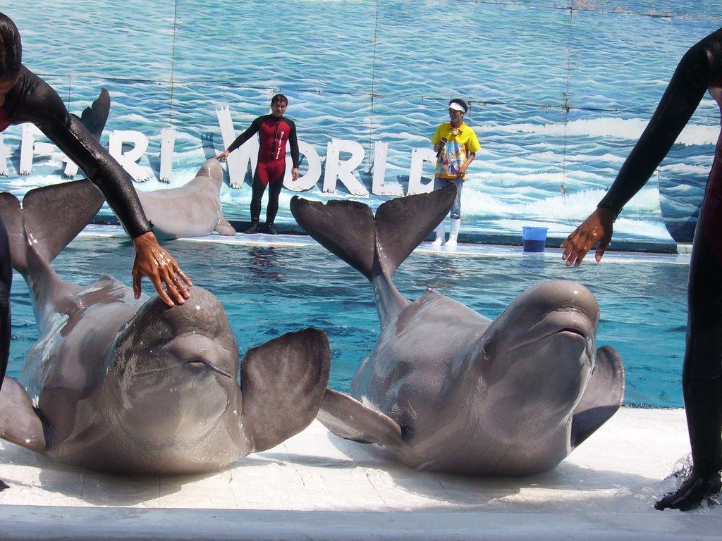 亲子游·曼谷野生动物园+海洋公园一日包车游
