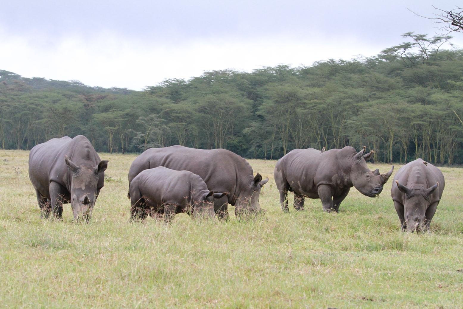 非洲鬣狗等野生动物