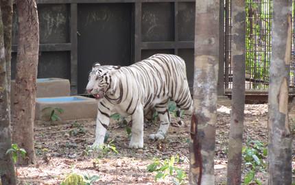 越南富国岛safari野生动物园门票