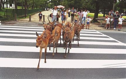 【Limon巴士】京都嵐山+金閣寺+奈良公園一日游(含午餐+中文服務)