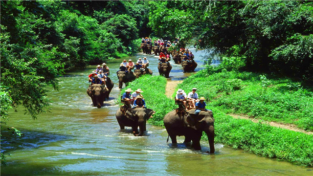 【丰富体验:骑大象与大象亲密接触】 这里的大象都很温顺,它们将载着你穿过Taro森林,悠闲体验热带风情。而你也可以伸手摸摸大象粗糙的皮肤,亲手喂它吃点东西,以示鼓励。大象们有时会友好地把长鼻子放在你肩头,甚至亲昵地搂住你的腰间,别忘了拿出相机捕捉这难忘的一刻。园内还有专为儿童准备的迷你组骑大象活动,小朋友也不必害怕哦。您可参与以下活动:骑大象、大象喂食与合影、大象表演SHOW