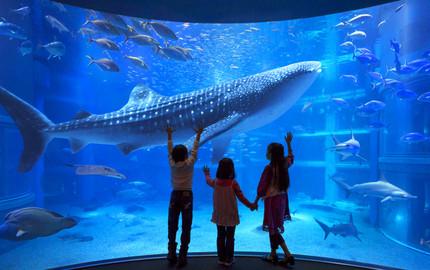 拉斯维加斯曼德勒湾鲨鱼礁水族馆LASSHARK