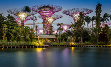 植物园,新加坡滨海湾花园