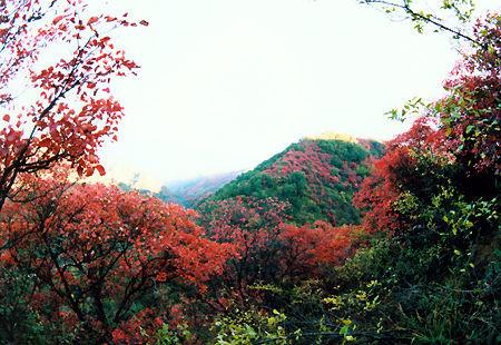 甘山森林公园