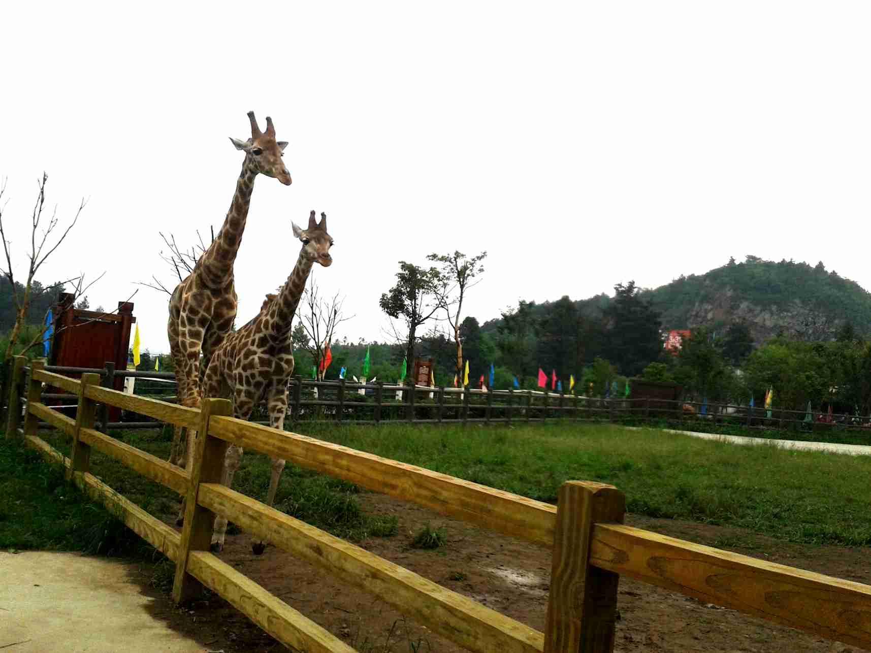 贵阳野生动物园