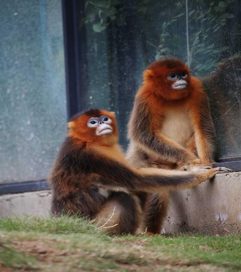 烟台南山公园动物园