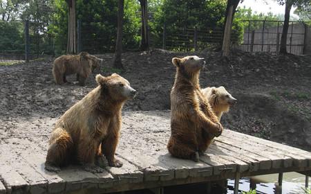 【常州淹城野生动物园团购】常州淹城野生动物园大学