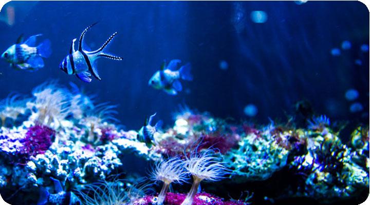 …各种有趣的海洋动物