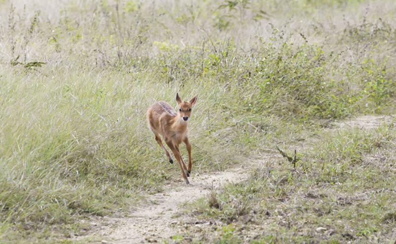 【大田坡鹿保护区】东方大田坡鹿保护区门票价格