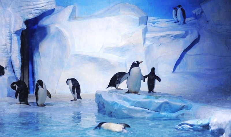 企鹅等珍稀的极地动物