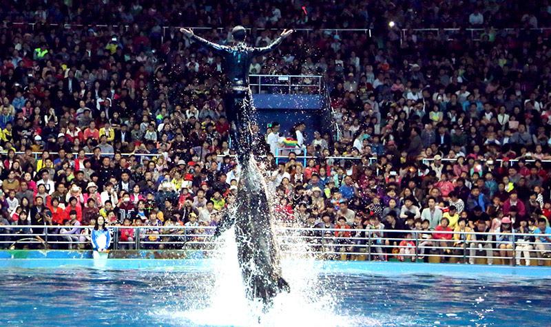 极地动物表演 三大表演