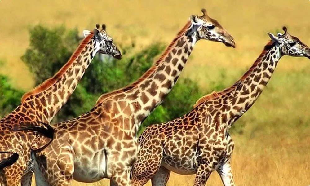 青岛森林野生动物世界:游玩时间8月1日-8月7日