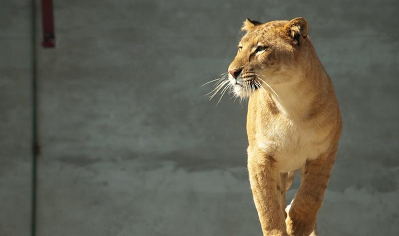 【红山森林动物园】南京红山森林动物园门票价格