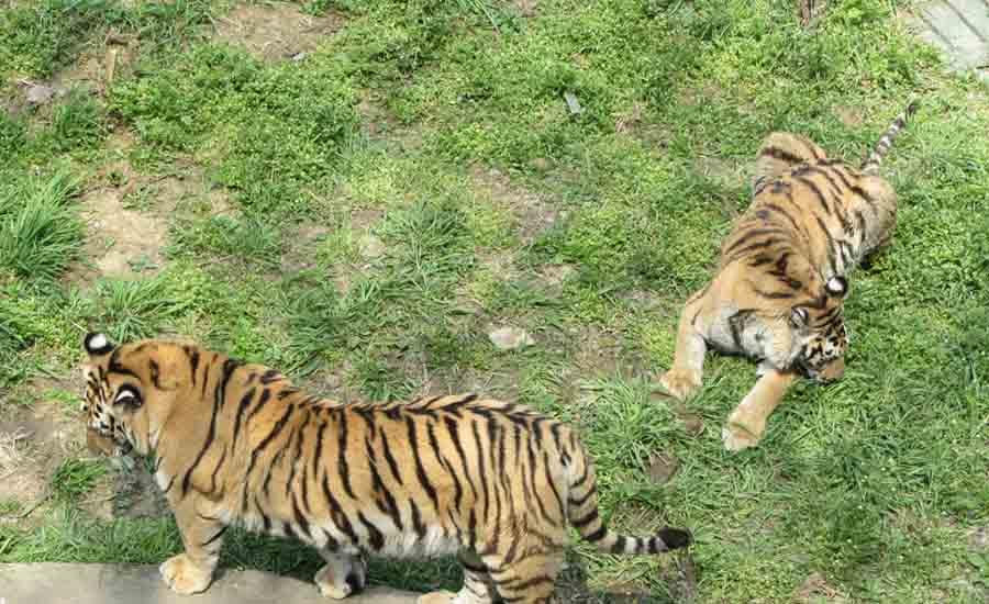 南京旅游 景点 红山森林动物园