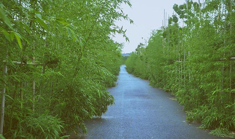 竹林雨滴动态壁纸