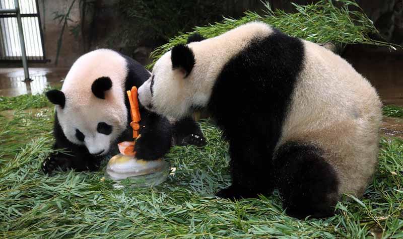 杭州景区门票 > 杭州动物园门票及相关产品   熊猫馆|国宝的住处 在