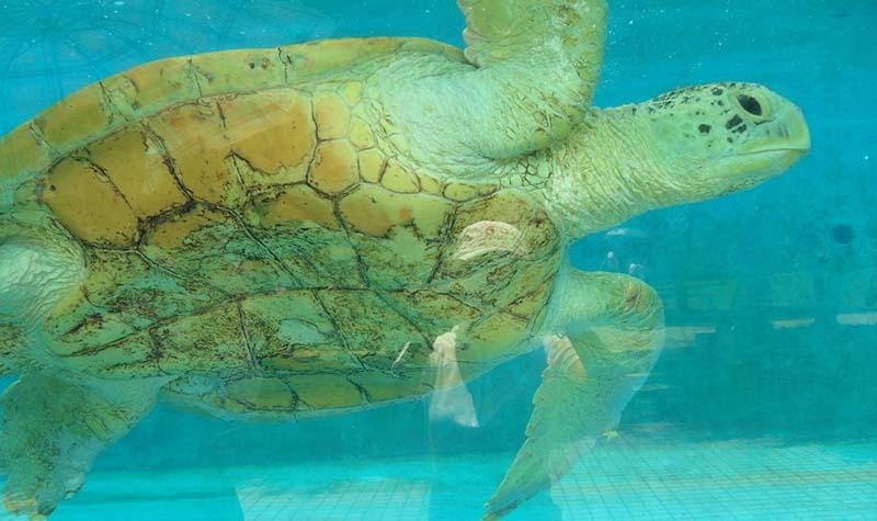 可爱的动物 动物城里还住着骆驼,熊等等陆地上的动物,还有海里的海龟