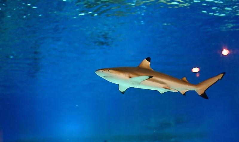 北京景区门票 > 北京海洋馆门票及相关产品   在这里,众多珍稀鲨鱼争