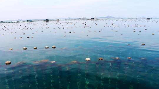 桑沟湾海洋牧场