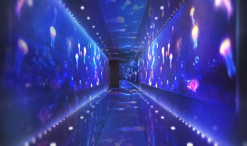 如丝绸般柔软的身体在水中轻摆摇曳,这些发光精灵时而在你的脚步间