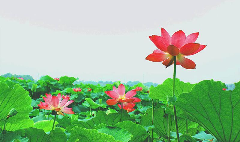 作爱有声有色_春游荷塘 一幅有声有色的水墨画