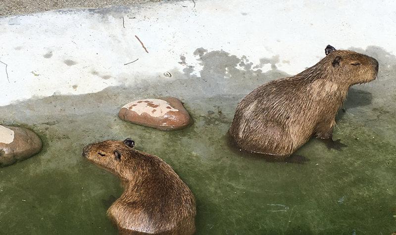 上海野生动物园门票_上海动物园门票多少钱_上海上海