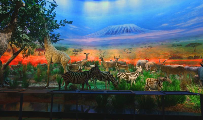 皇家动物乐园 一场奇妙的梦幻之旅