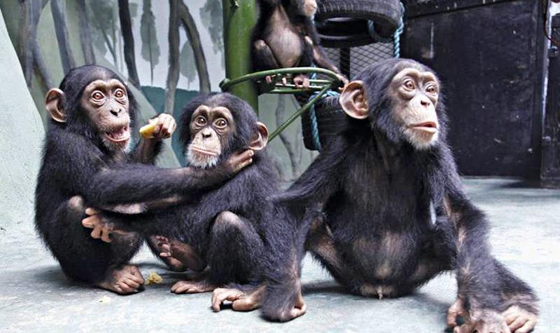 山东景区门票 济南动物园
