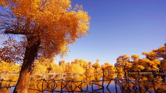 胡杨林获生态补水-旅游丨内蒙古全天候受理旅游质量投诉