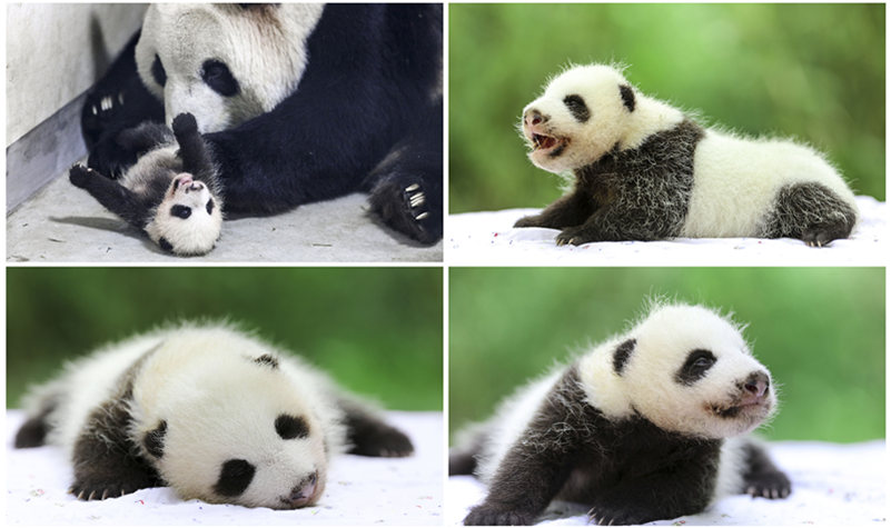 上海野生动物园优惠打折订票