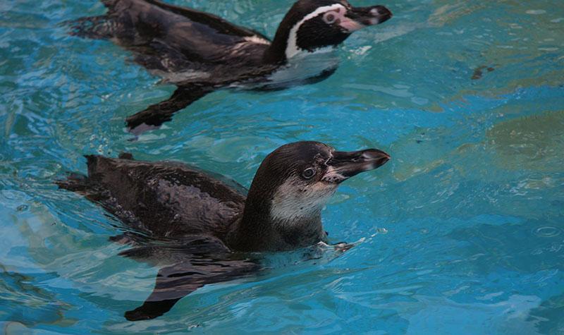 云南海洋动物园图片