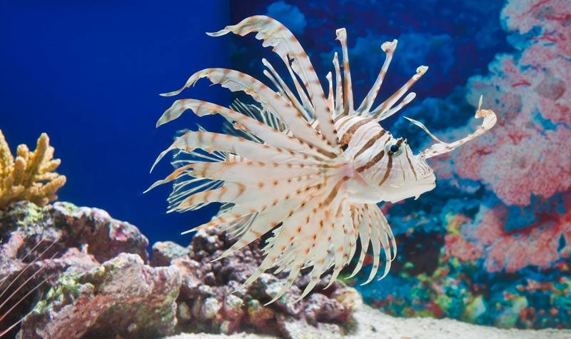 海洋性哺乳类动物