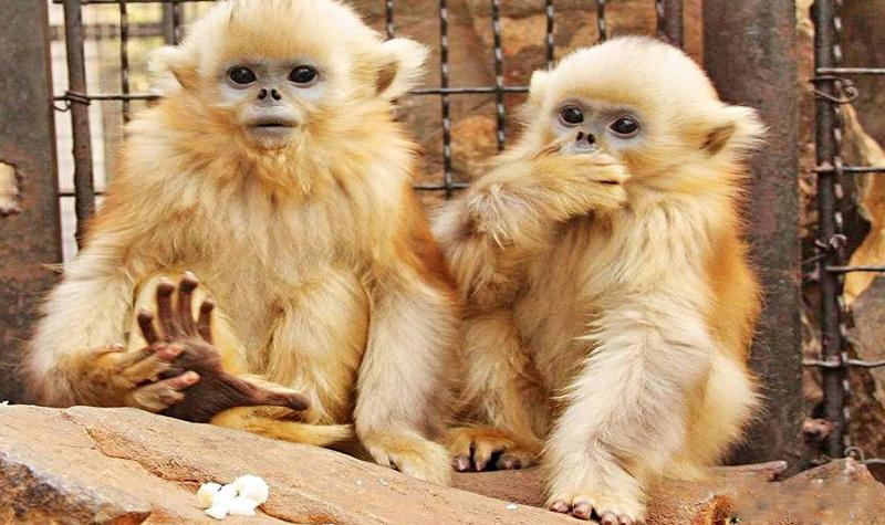 西安秦岭野生动物园门票预订