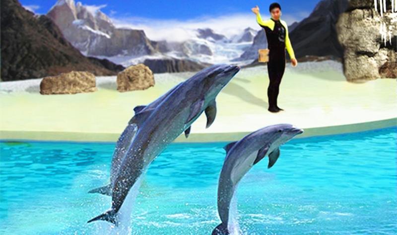 壁纸 动物 海洋动物 鲸鱼 桌面 800_475