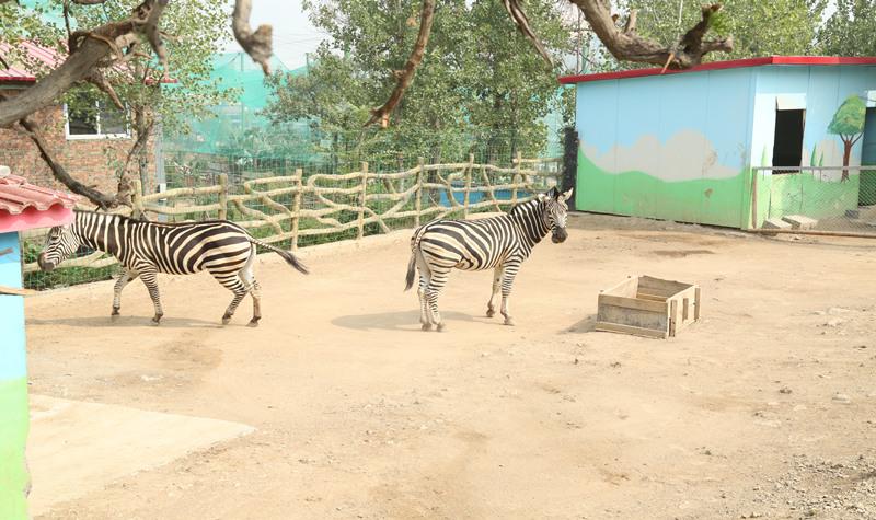 园 景点简介:                               五龙山野生动物王国