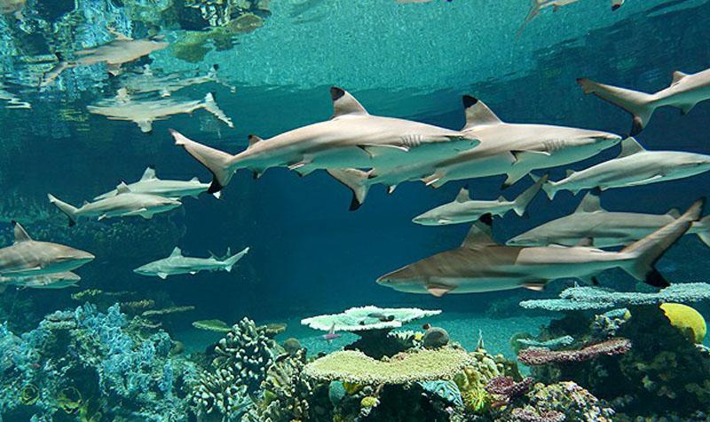 壁纸 动物 海底 海底世界 海洋馆 水族馆 鱼 鱼类 800_475