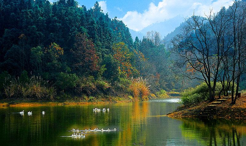 【开心旅行】 千岛湖龙川湾-森林氧吧纯玩2日游>宿千岛湖36都珍珠半岛