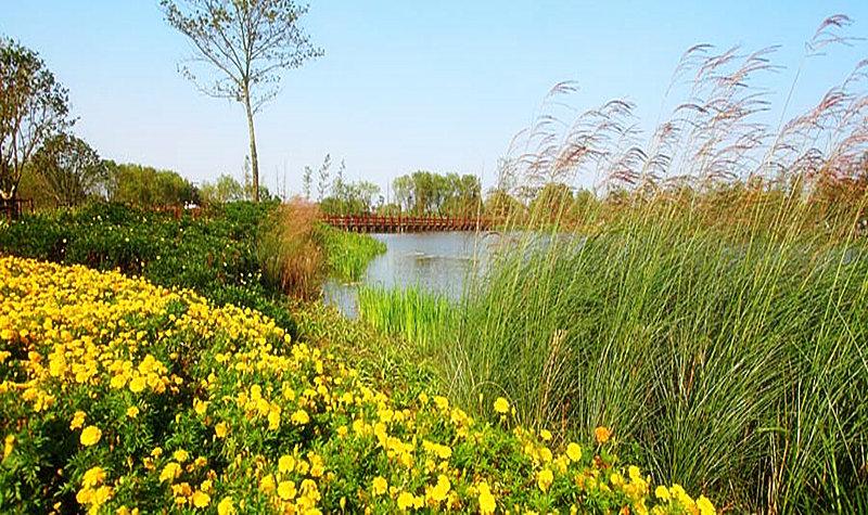 区内原生态环境良好,分布各种水生动植物、树种、及鸟类,是一本动植物的百科全书。一期开发的白鹭洲与农耕岛既包括农田景观区、观鸟区、荷塘秀色等美景,还有水上游船、千年贡茶、特色菱桶表演等参与互动项目,是集原生态展示、文化宣讲、旅游观光、休闲度假于一体的综合性文化旅游景区。