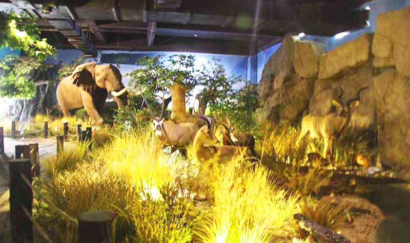 珍视野生动物资源 生态环境保护