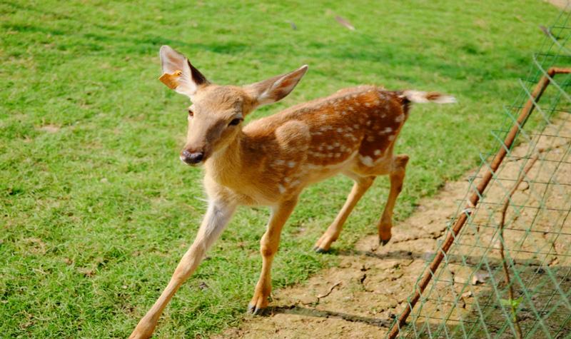 在大自然里,一只只可爱的小动物在你身边,完全满足你对大自然追求和