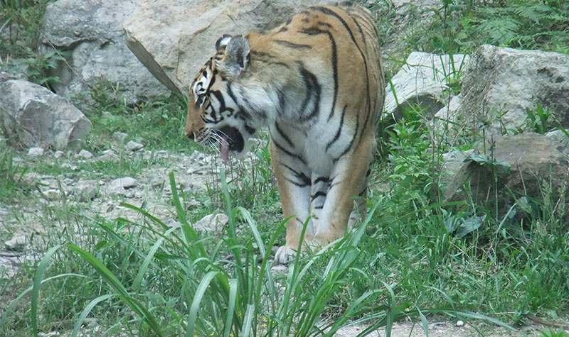 金华动物园