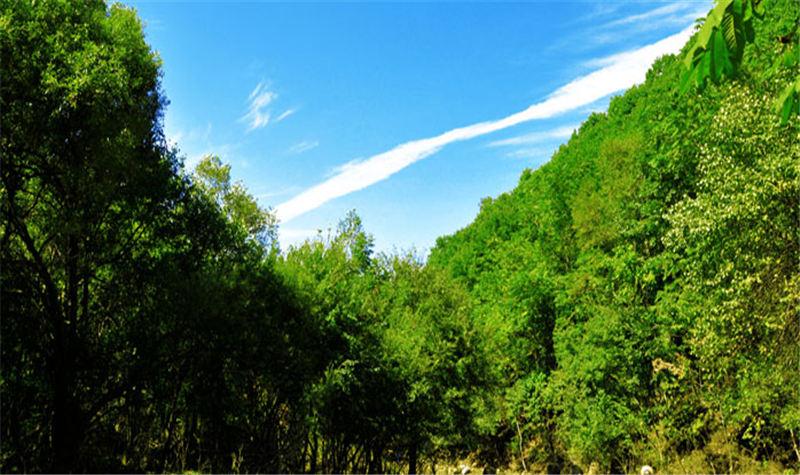 和睦国家森林公园